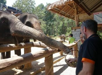 Dar-de-comer-a-elefantes-una-interaccion-sana-y-divertida[1]